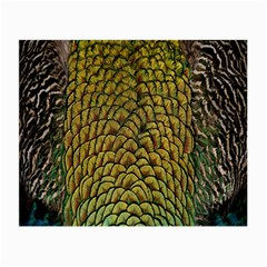 Colorful Iridescent Feather Bird Color Peacock Small Glasses Cloth