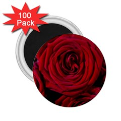 Roses Flowers Red Forest Bloom 2 25  Magnets (100 Pack)