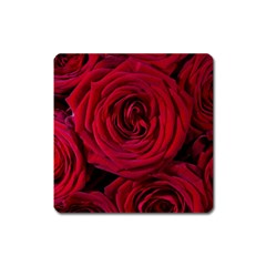 Roses Flowers Red Forest Bloom Square Magnet