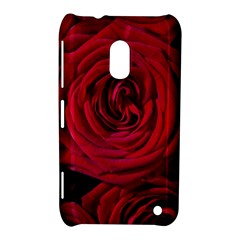 Roses Flowers Red Forest Bloom Nokia Lumia 620