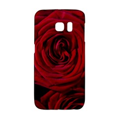 Roses Flowers Red Forest Bloom Galaxy S6 Edge
