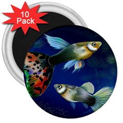 Marine Fishes 3  Magnets (10 Pack)