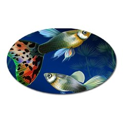 Marine Fishes Oval Magnet