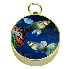 Marine Fishes Gold Compasses