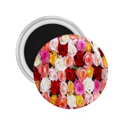 Rose Color Beautiful Flowers 2 25  Magnets