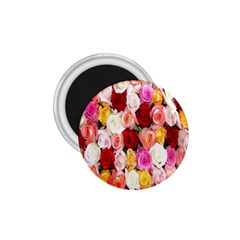 Rose Color Beautiful Flowers 1 75  Magnets