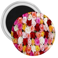 Rose Color Beautiful Flowers 3  Magnets