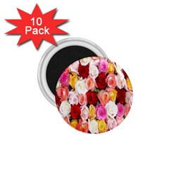 Rose Color Beautiful Flowers 1.75  Magnets (10 pack)