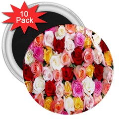 Rose Color Beautiful Flowers 3  Magnets (10 Pack)