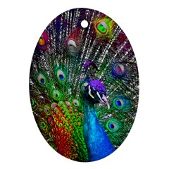 3d Peacock Pattern Ornament (Oval)