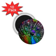 3d Peacock Pattern 1 75  Magnets (10 Pack)