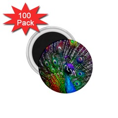 3d Peacock Pattern 1 75  Magnets (100 Pack)