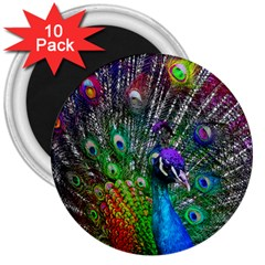 3d Peacock Pattern 3  Magnets (10 Pack)