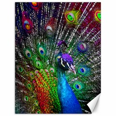 3d Peacock Pattern Canvas 12  X 16