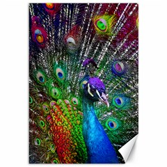 3d Peacock Pattern Canvas 12  x 18