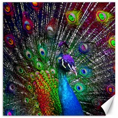 3d Peacock Pattern Canvas 20  x 20