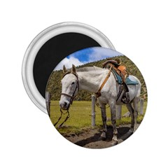 White Horse Tied Up at Cotopaxi National Park Ecuador 2.25  Magnets