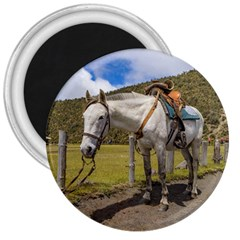 White Horse Tied Up at Cotopaxi National Park Ecuador 3  Magnets