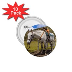 White Horse Tied Up at Cotopaxi National Park Ecuador 1.75  Buttons (10 pack)