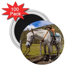 White Horse Tied Up at Cotopaxi National Park Ecuador 2.25  Magnets (100 pack)