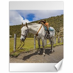 White Horse Tied Up at Cotopaxi National Park Ecuador Canvas 12  x 16
