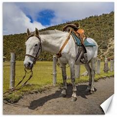 White Horse Tied Up at Cotopaxi National Park Ecuador Canvas 16  x 16