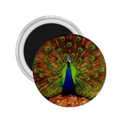 3d Peacock Bird 2 25  Magnets