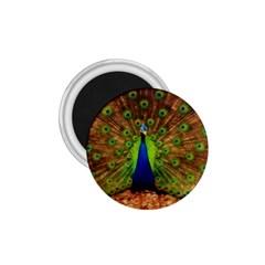 3d Peacock Bird 1 75  Magnets