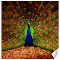 3d Peacock Bird Canvas 12  X 12
