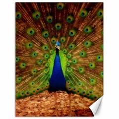 3d Peacock Bird Canvas 18  X 24