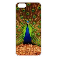 3d Peacock Bird Apple Iphone 5 Seamless Case (white)