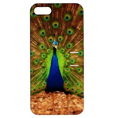 3d Peacock Bird Apple Iphone 5 Hardshell Case With Stand