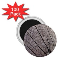 Sea Fan Coral Intricate Patterns 1 75  Magnets (100 Pack)