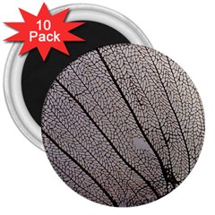 Sea Fan Coral Intricate Patterns 3  Magnets (10 Pack)