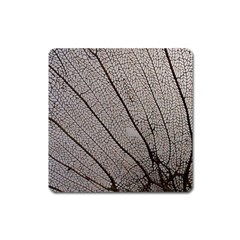 Sea Fan Coral Intricate Patterns Square Magnet