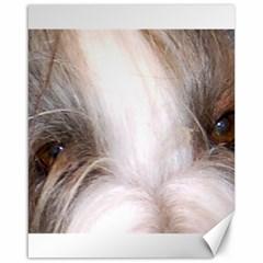 Bearded Collie Eyes Canvas 16  x 20