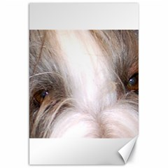 Bearded Collie Eyes Canvas 20  x 30