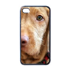 Vizsla second Apple iPhone 4 Case (Black)