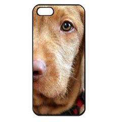 Vizsla second Apple iPhone 5 Seamless Case (Black)