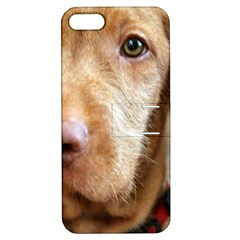 Vizsla second Apple iPhone 5 Hardshell Case with Stand