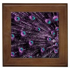 Bird Color Purple Passion Peacock Beautiful Framed Tiles