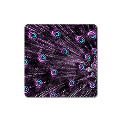 Bird Color Purple Passion Peacock Beautiful Square Magnet