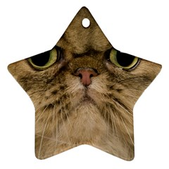 Cute Persian Cat face In Closeup Ornament (Star)