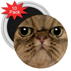 Cute Persian Cat face In Closeup 3  Magnets (10 pack)