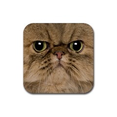 Cute Persian Cat Face In Closeup Rubber Coaster (square)