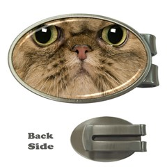 Cute Persian Cat Face In Closeup Money Clips (oval)