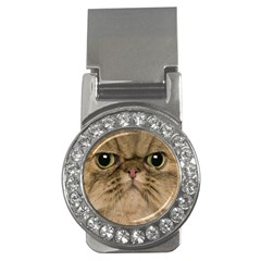 Cute Persian Cat Face In Closeup Money Clips (cz)