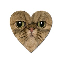 Cute Persian Cat face In Closeup Heart Magnet