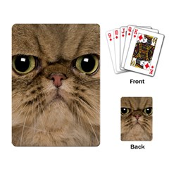 Cute Persian Cat Face In Closeup Playing Card