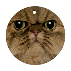 Cute Persian Cat face In Closeup Round Ornament (Two Sides)